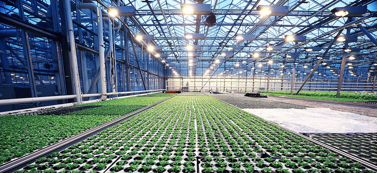 know more about grow light