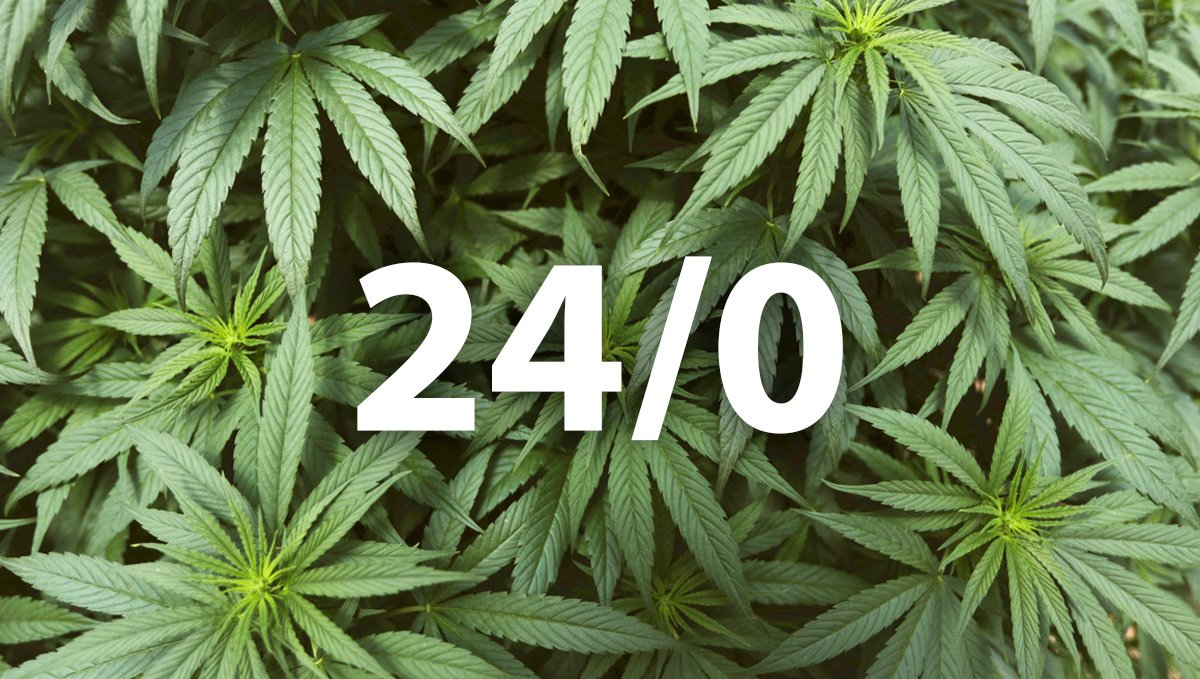 24/0 Light Cycle for cannabis plants