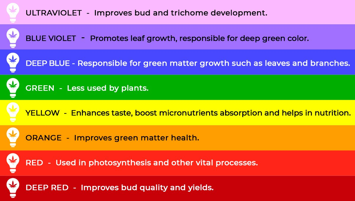 light spectrum and its benefits for cannabis growth